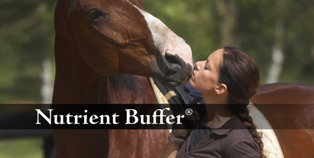 Natural Remedy For Ulcers In Horses
